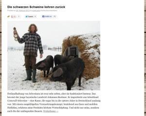 Johannes Buchner und seine Cornwall Schweine